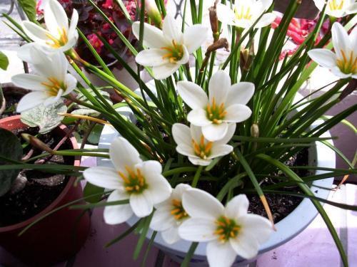 蔥蘭凌霄這8種花都在8月份開好養是盆栽佳品 M頭條